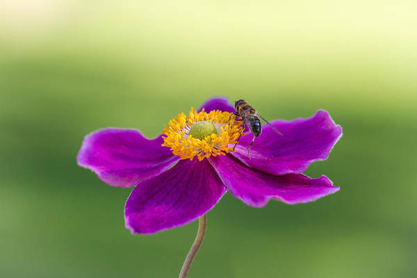 Photograph - Cosmos by Clare Bambers