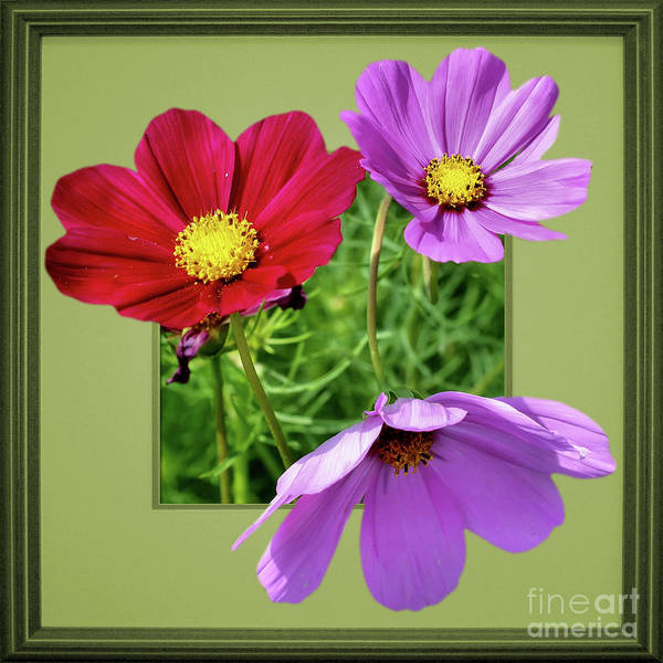 Photograph - Cosmos Flower Peeking Out by Smilin Eyes  Treasures
