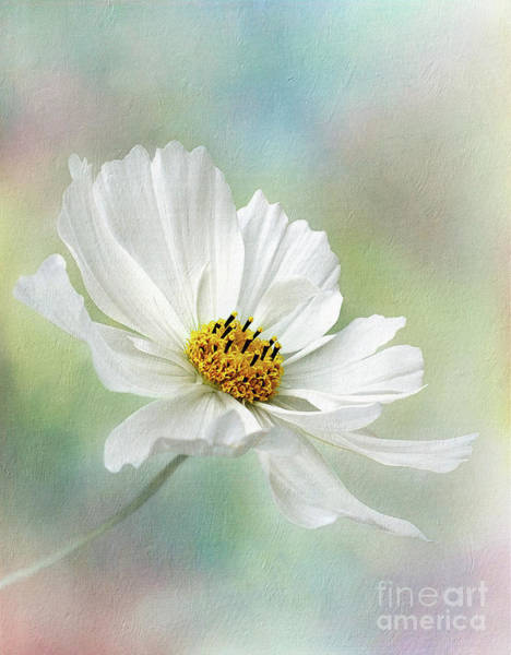 Overlay Photograph - Cosmos Pastel By Kaye Menner by Kaye Menner