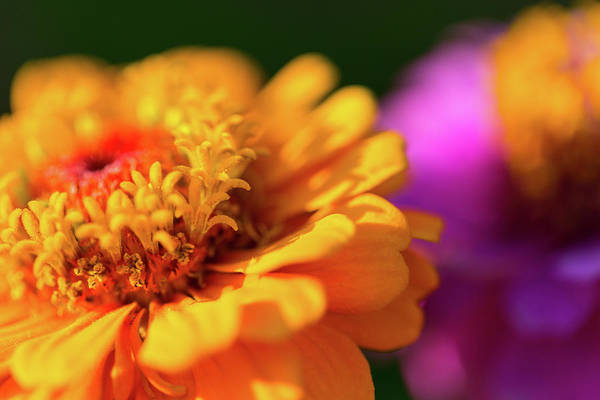 Photograph - Cosmos by SR Green