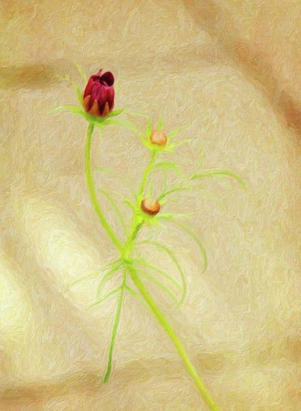 Photograph - Cosmos by Sue Collura