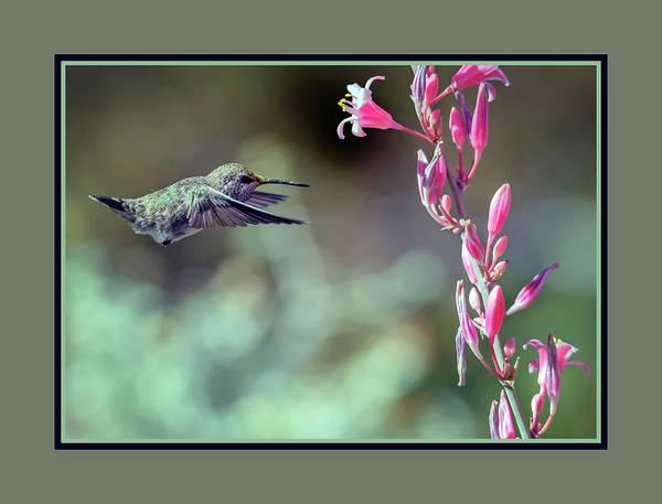Photograph - Costa's Hummingbird 0556-051318-1cr-matte by Tam Ryan
