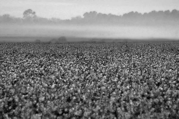 Digital Art - Cotton And Fog by Michael Thomas