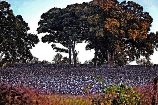Pea Digital Art - Cotton And The Broccoli Tree 2 by Michael Thomas