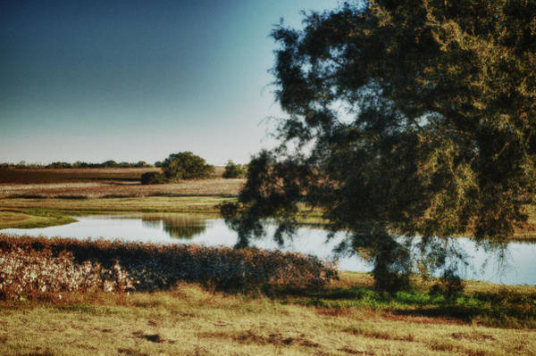 Pea Digital Art - Cotton And The Evening Pond by Michael Thomas