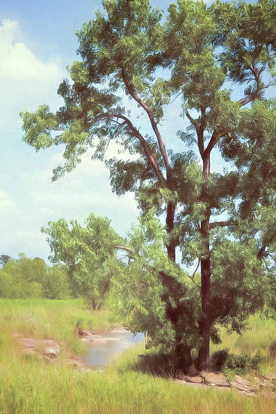 Tallgrass Wall Art - Photograph - Cotton By The Stream by Lana Trussell