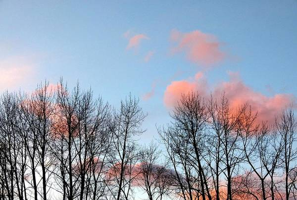 Wall Art - Photograph - Cotton Candy Clouds by Will Borden