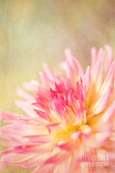 Photograph - Cotton Candy by Beve Brown-Clark Photography