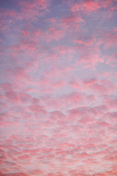 Wall Art - Photograph - Cotton Candy Sky by Art Block Collections