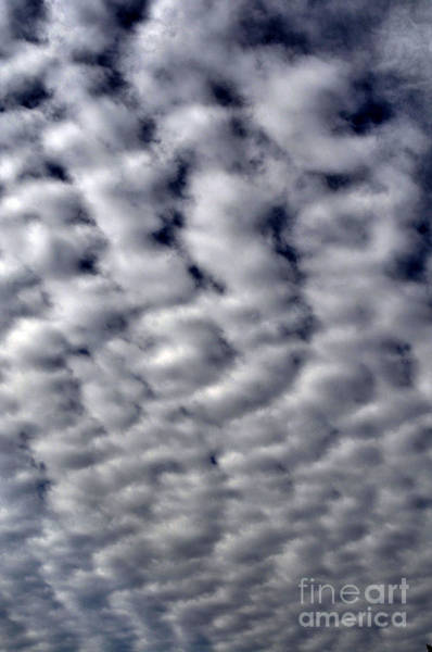 Photograph - Cotton Clouds by Clayton Bruster