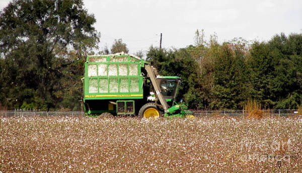 Wall Art - Photograph - Cotton Picker by Donna Brown