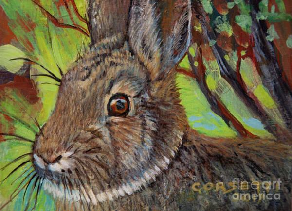 Cotton Tail Rabbit Art Print