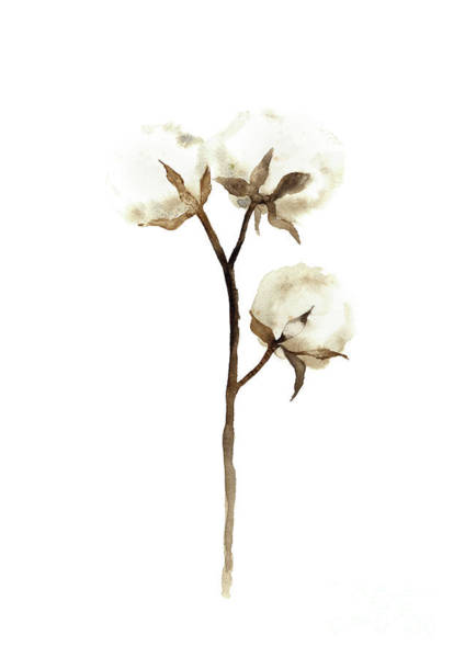 Wall Art - Painting - Cotton White Brown Beige Watercolor Art Print Natural Home Decor Abstract Flower Minimalist Poster by Joanna Szmerdt
