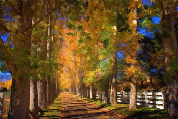 Wall Art - Photograph - Cottonwood Alley by Donna Kennedy