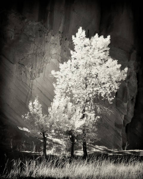 Ir Photograph - Cottonwood And Canyon Wall by Joseph Smith