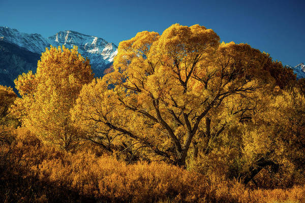 Pine Grove Photograph - Cottonwood And Willow by Dan Holmes