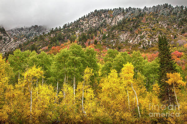 Photograph - Cottonwood Canyon by David Millenheft