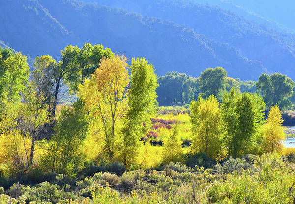 Eagle Ray Photograph - Cottonwood Fall Color Along Eagle River by Ray Mathis
