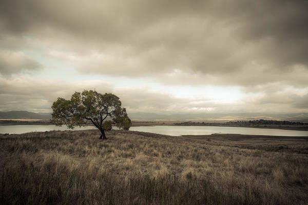 Photograph - Cottonwood In October by Alexander Kunz