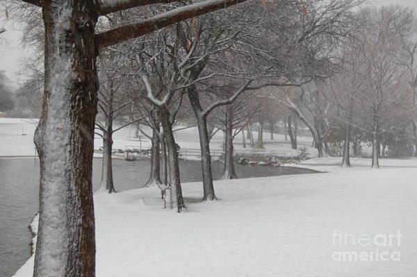 Photograph - Cottonwood Park Winter by Bill Hamilton