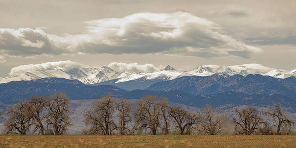 Photograph - Cottonwood Trees Rocky Mountain View by James BO Insogna
