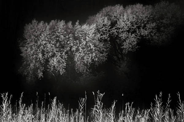 Ir Photograph - Cottonwoods And Grasses by Joseph Smith