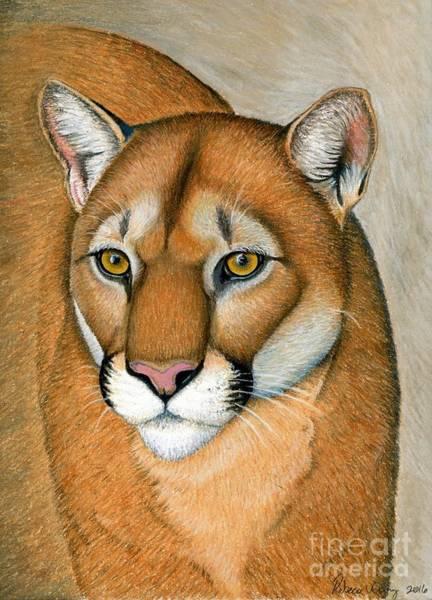 Pastel - Cougar Portrait by Rebecca Wang