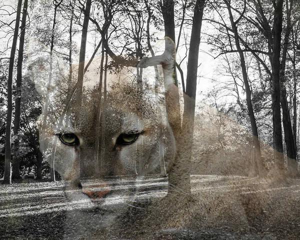 Puma Digital Art - Cougar The Cunning One by Bob Mullins