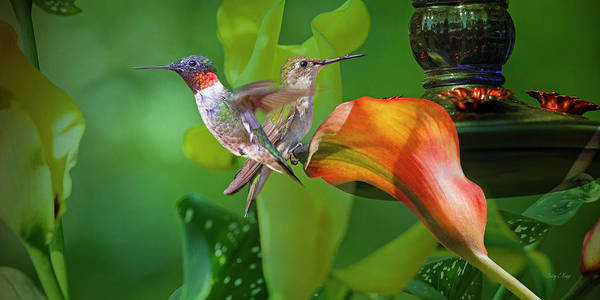 Hummingbird Wings Photograph - Could This Be Love by Betsy Knapp