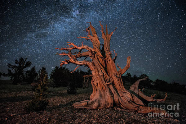 Photograph - Countless Starry Nights by Melany Sarafis