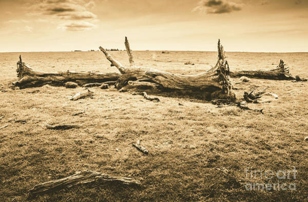 Timbers Photograph - Countrified Australia by Jorgo Photography - Wall Art Gallery