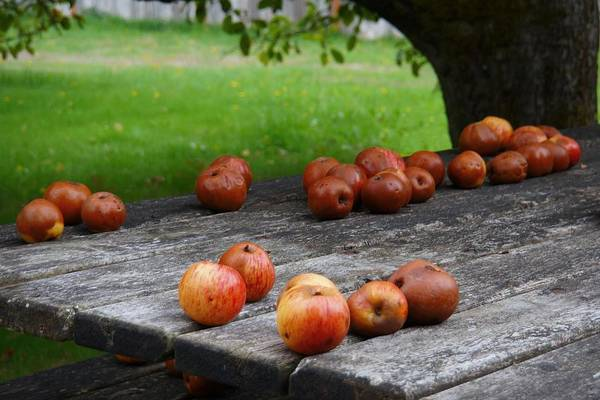 Photograph - Country Apples by Patricia Strand