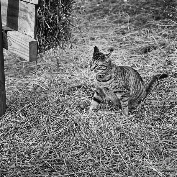 Photograph - Country Cat by Patrick M Lynch
