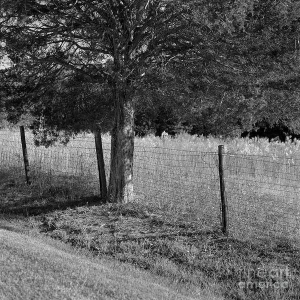 Photograph - Country Fence by Patrick M Lynch