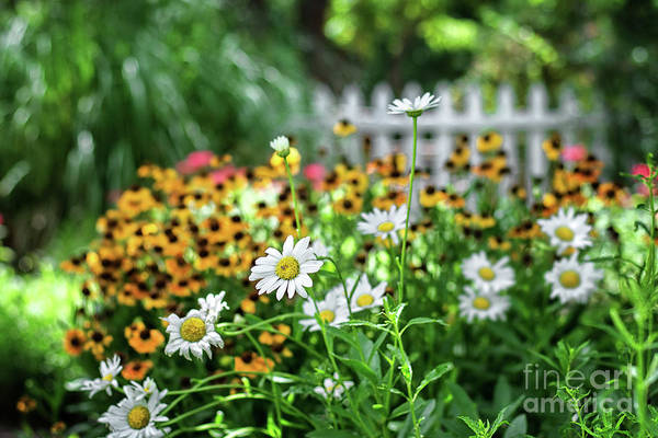 Photograph - Country Garden by Susan Warren