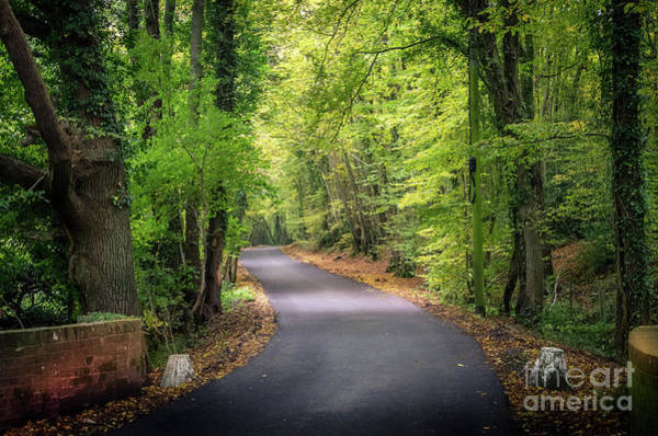 Photograph - Country Lane, Close To Home by Perry Rodriguez