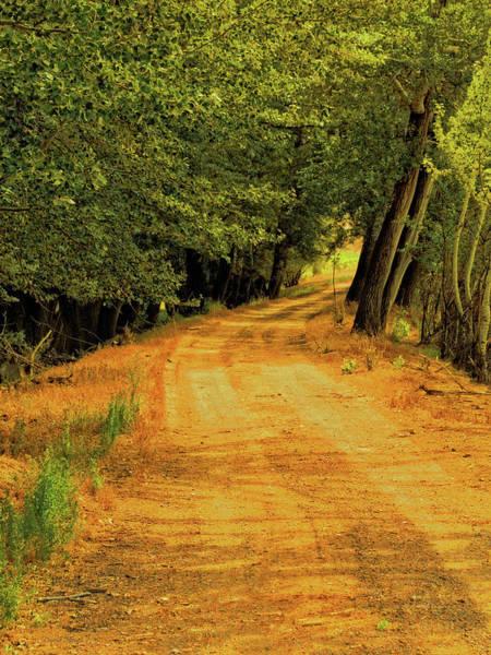 Photograph - Country Lane by David King