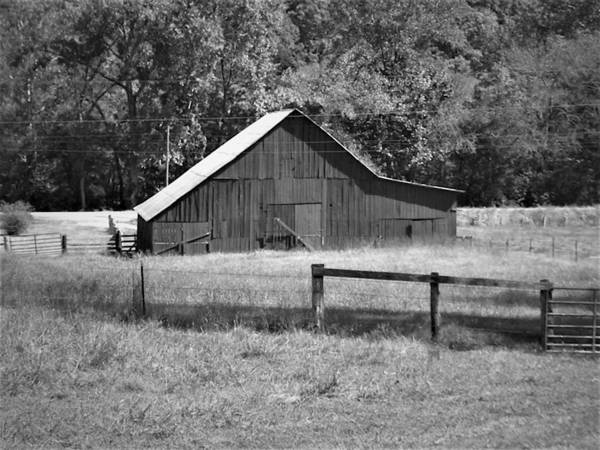 Photograph - Country Life by Ken Bradford