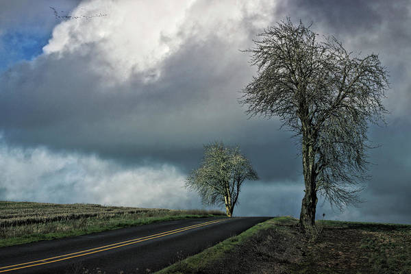 Wall Art - Photograph - Country Road by Bonnie Bruno