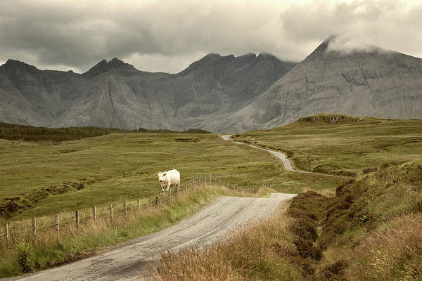 Wall Art - Photograph - Country Road by Christian Heeb