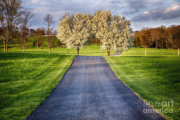 Wall Art - Photograph - Country Road During Early Spring by George Oze
