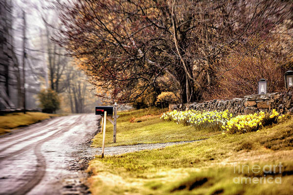 New Preston Ct Photograph - Country Road by Grant Dupill