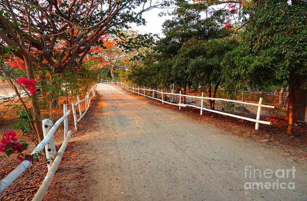 Photograph - Country Road In Batangas by Christopher Shellhammer