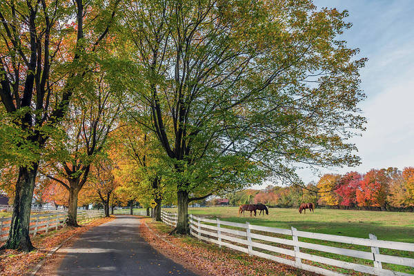 Photograph - Country Road In Rural Maryland During Autumn by Patrick Wolf