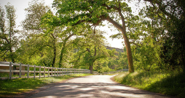 Photograph - Country Road - Willow City Loop by Brian Kinney
