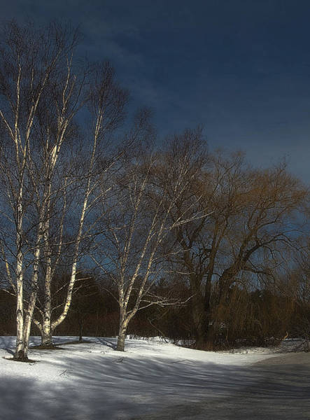 Photograph - Country Roadside Birch by JGracey Stinson