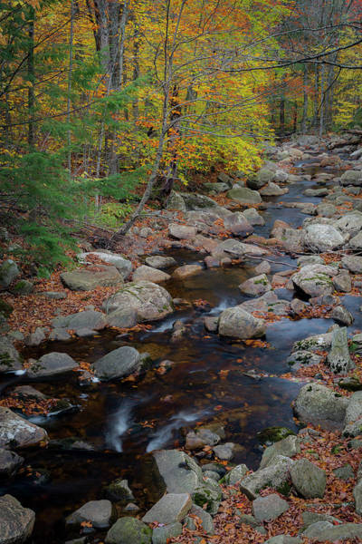 Photograph - Country Stream by Gary Lengyel