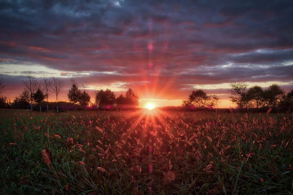 Photograph - Country Sunset by Mark Dodd