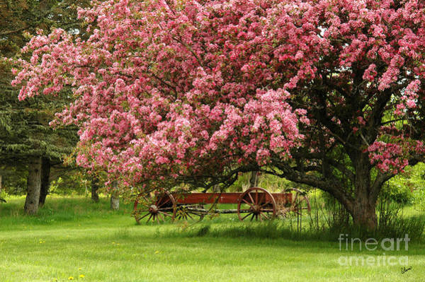 Photograph - Country Wagon by Alana Ranney