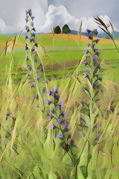 Photograph - Country Wildflowers by Debra and Dave Vanderlaan